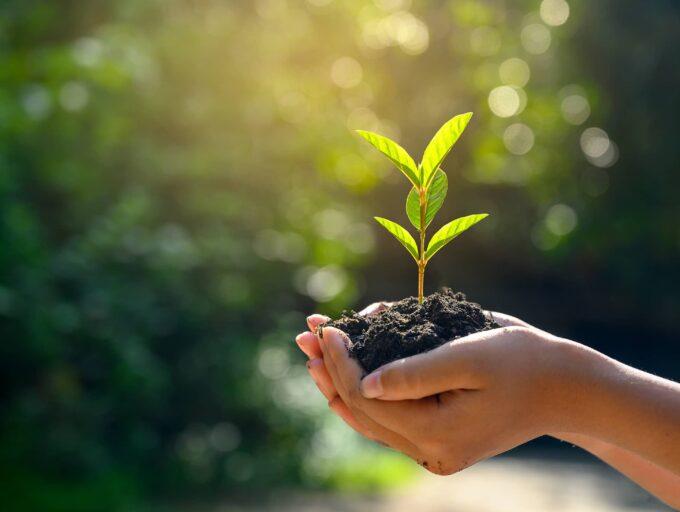 2 Hände mit einem Haufen frischer Erde aus dem eine Plänze wächst